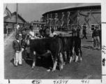 Boys showing cattle