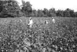 African-Americans in field