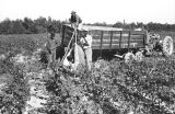 African-Americans working in field